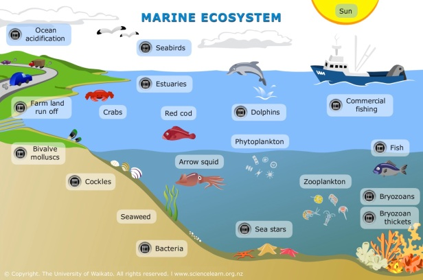 SEA_ITV_MarineEcosystems_BG-PLATE_Updated_Apr2017_FINAL